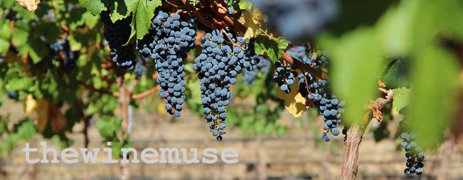 red-grapes-long