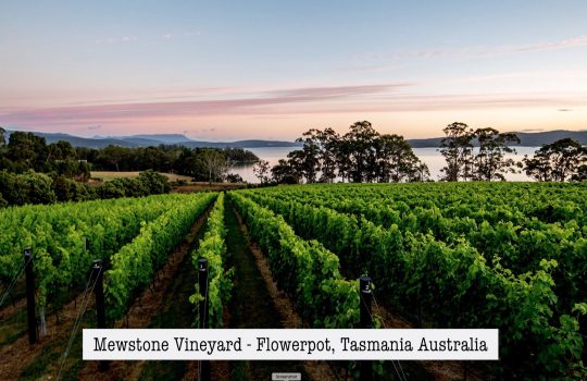 Winemusing Wine Review – Mewstone Wines Pinot Noir