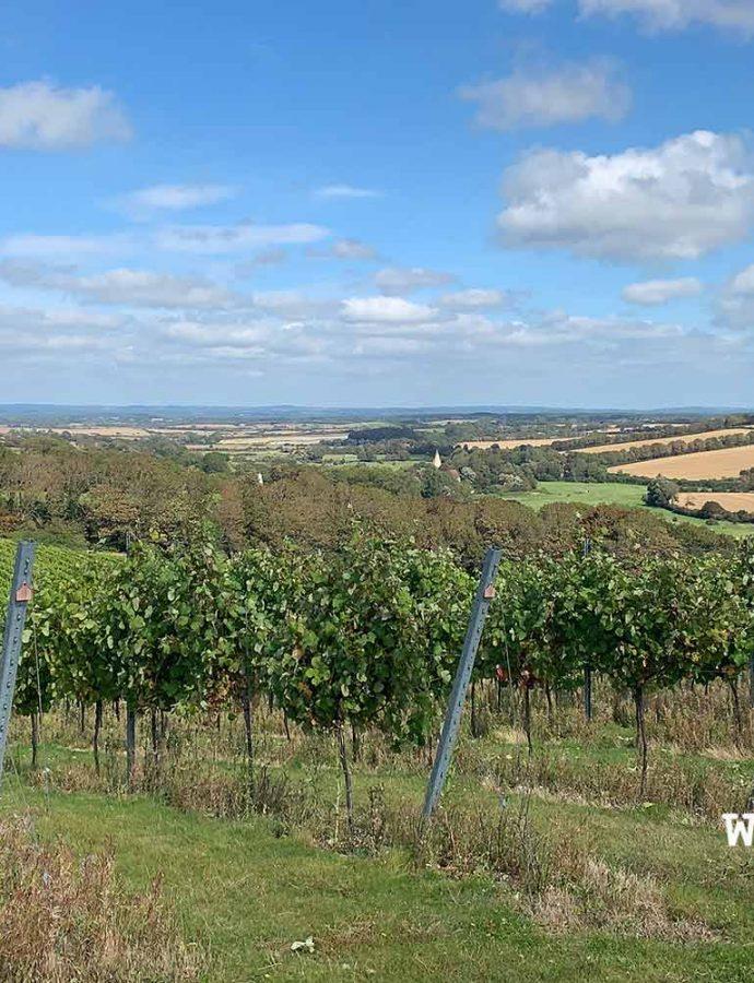 Winery Spotlight: Getting to know Rathfinny Wine Estate