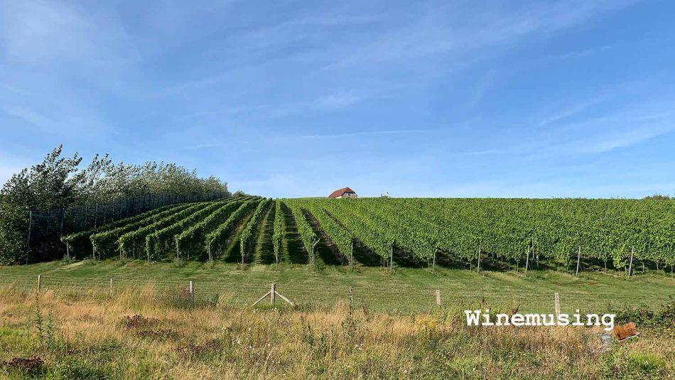 Rathfinny vines